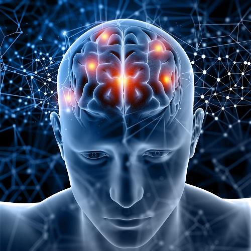 뇌 사진.jpg