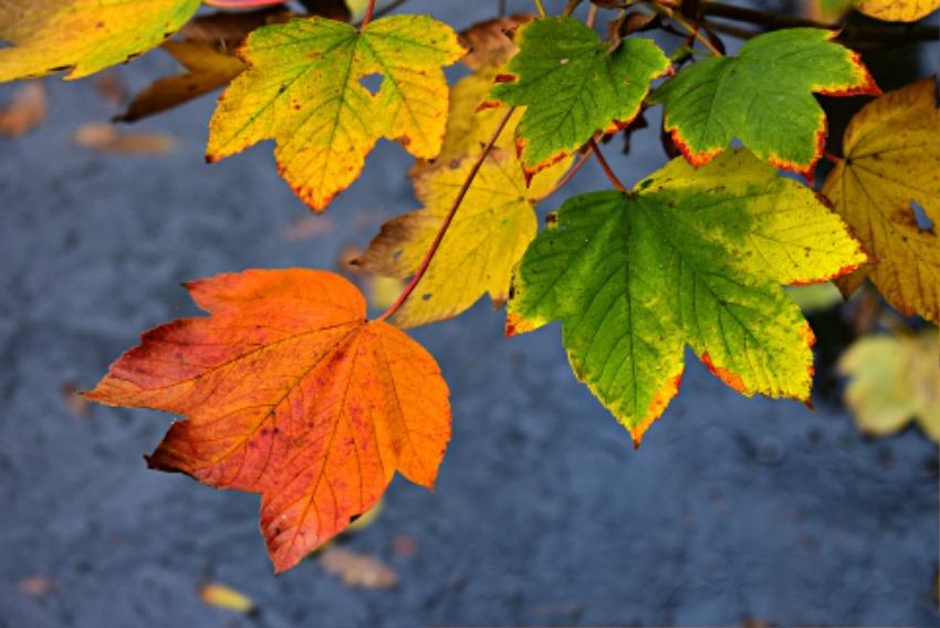autumn-leaf-3881677_1920.jpg